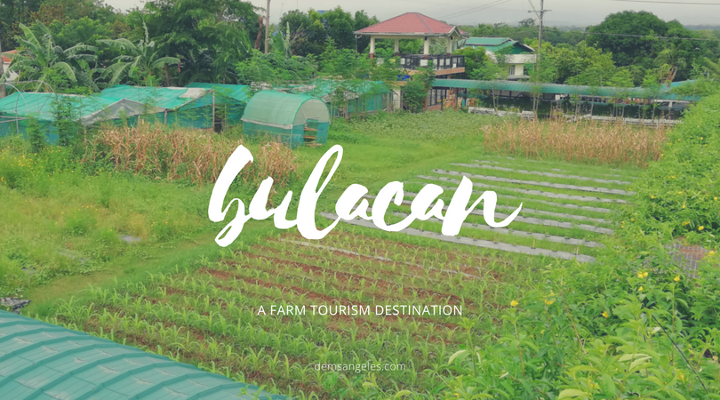 Weekend trip: farm hopping in Bulacan