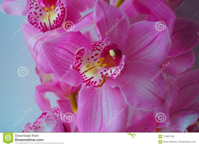 Orchid Wedding Invitations The Orchid Flowers Beautiful Floral Background For Greeting Cards