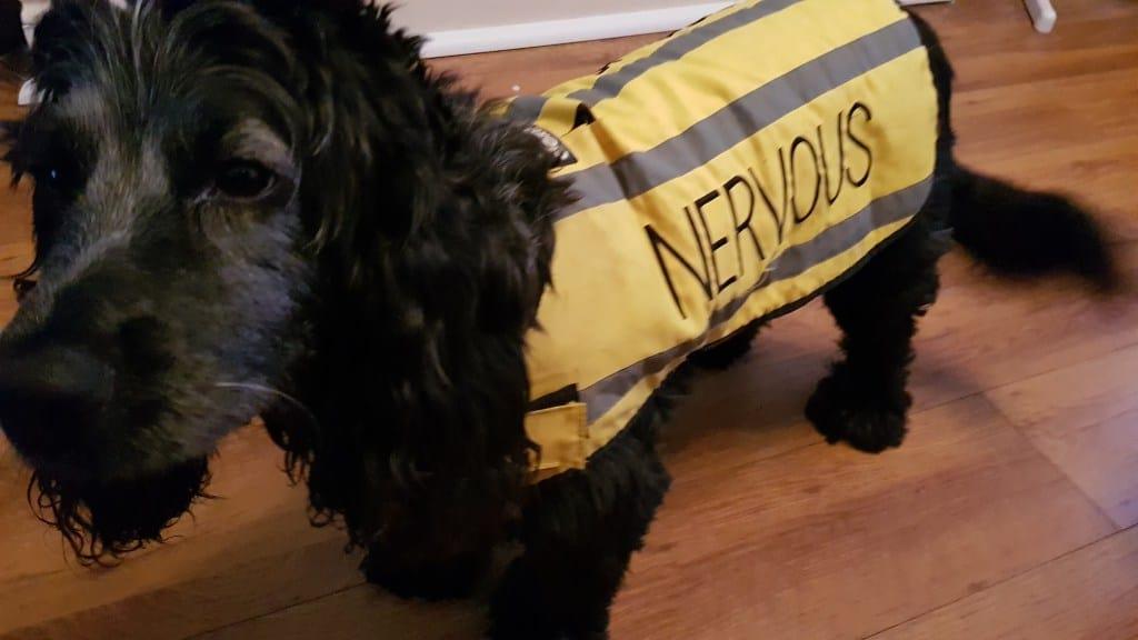 Get the space your nervous dog deserves!