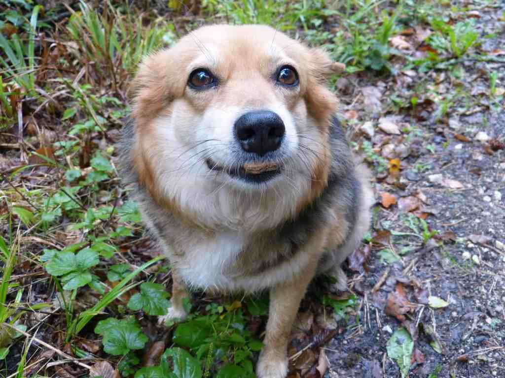 How can I stop my dog from eating stones and pebbles from the ground?