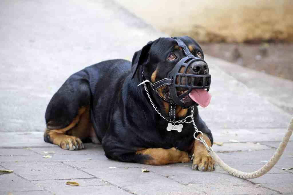 Should I muzzle my dog?