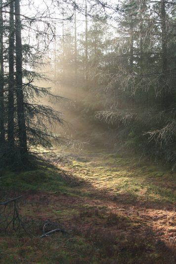Fugtigheden efter regnen får solen til at glitre i dråberne på grenene.