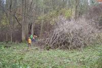 Čištění bývalého sadu od náletových dřevin