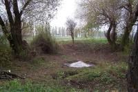 Po vyř™ezání náletu a spálení starých vrbových větví (vlevo)