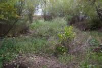 Pohled od pole, př™es rybníček, směrem k silnici (př™ed)
