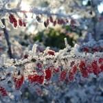 2018.01.13 2 - Téli öntözés: légy körültekintő