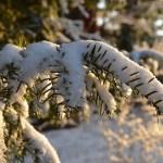 2018.01.16. - Erre figyelj a kertben, ha esik a hó