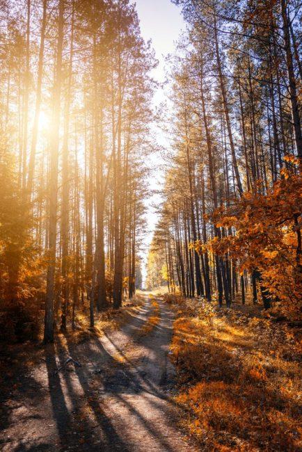 sonbahar manzarası, sonbaharda yürüyüş