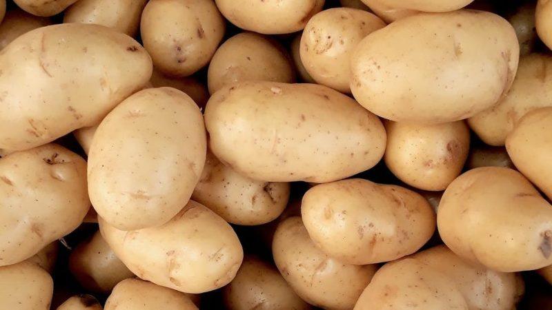 patates göz altı morlukları