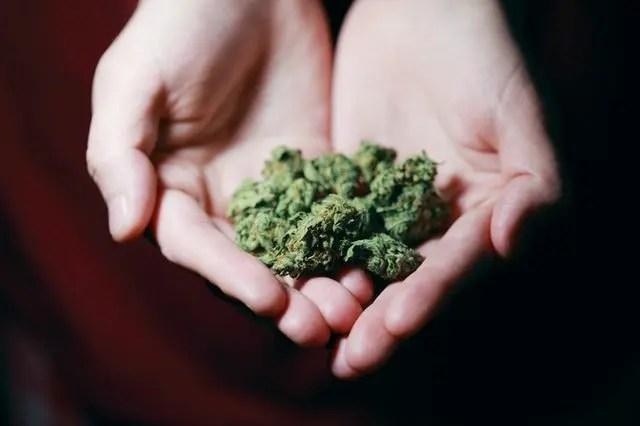 Du kan nå studere medisinsk cannabis på New Zealand