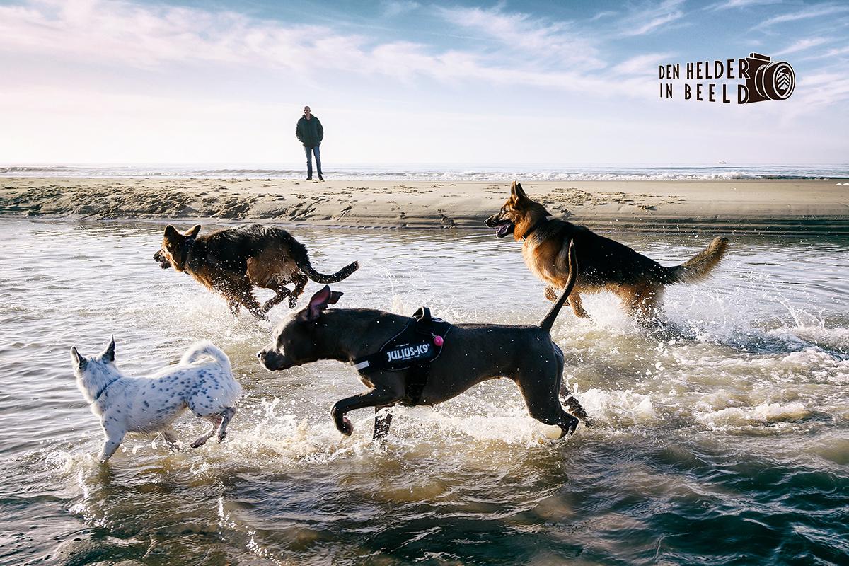 Oudejaars Hondenwandeling