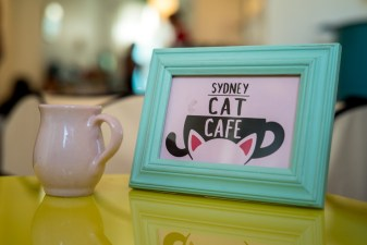 CatcafeSydney05_201510