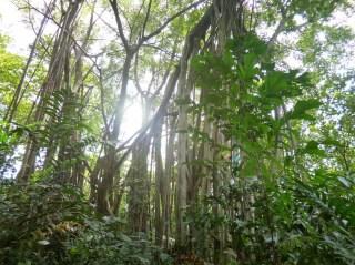 Eternal 888 at Sungei Buloh Part 2 Forest