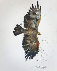 Aigle 23x35