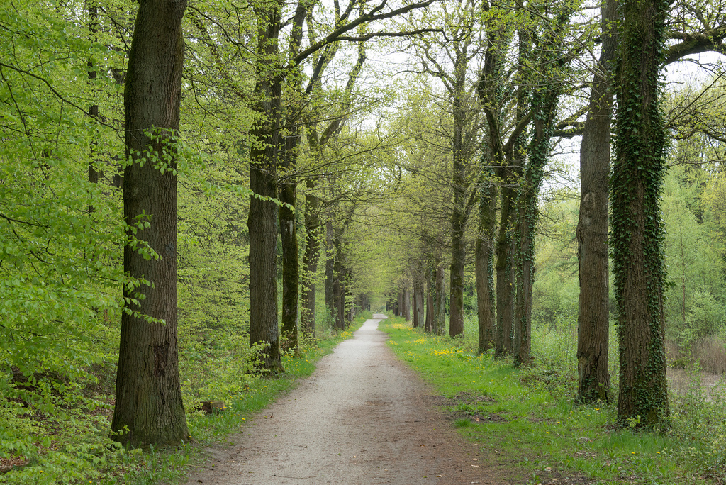 Karel and I went for a walk in one of the (relatively few) forests in The Netherlands.
