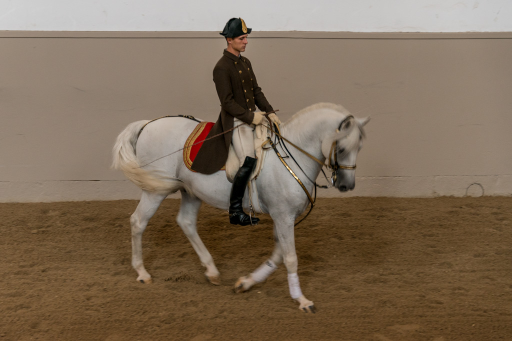 Another required activity for horse-lovers in Vienna: see the famous Lippazan horses at work.