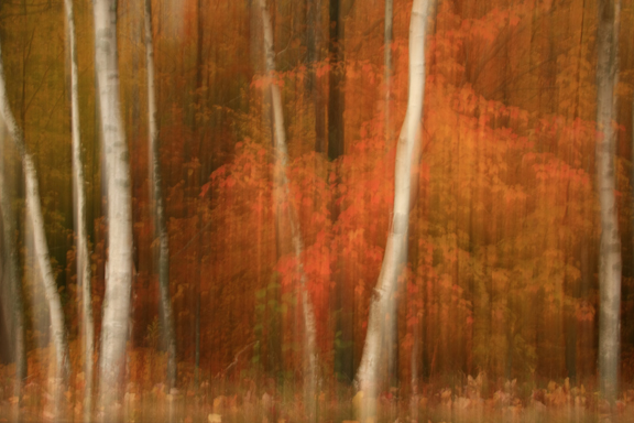 Image created by panning vertically during the exposure. © 2009 Denise Bush