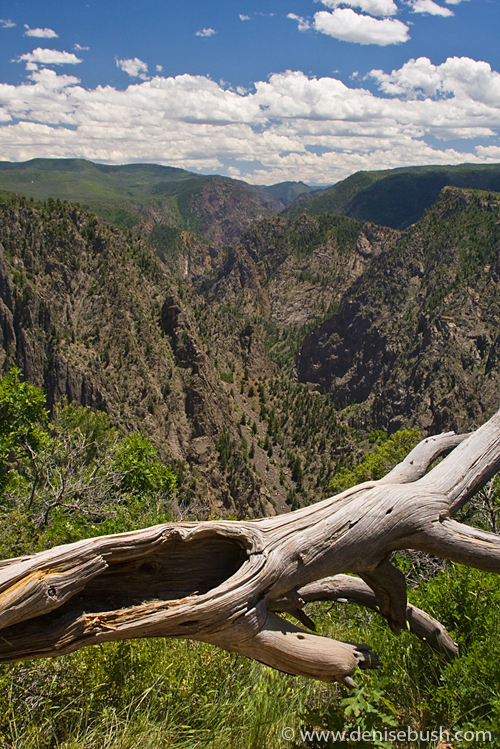'Black Canyon View' © Denise Bush