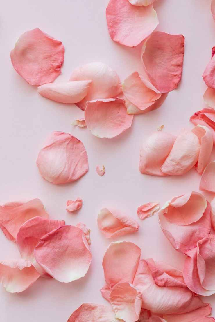 pink petals on pink surface