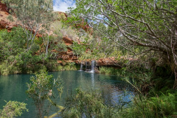 Fern Pool - Karijini, Western Australia