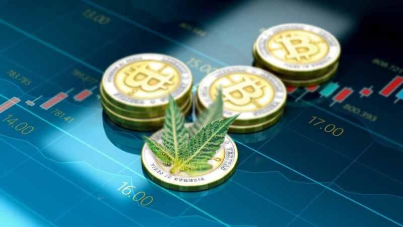 Miner du bitcoin pour faire pousser du cannabis ? 1