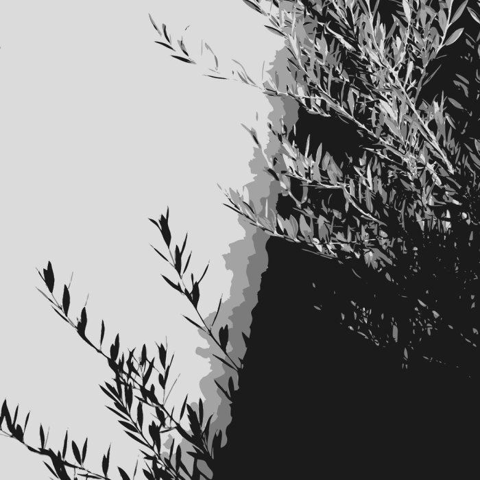 db_olivenbaum.jpg