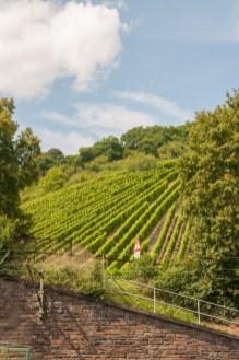 steep-sloping-vineyards