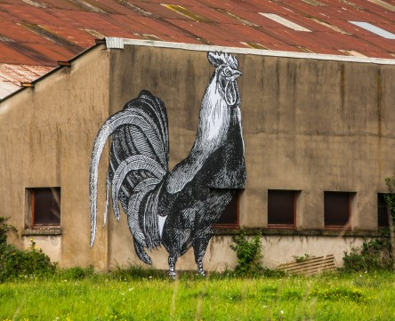 giant-cock