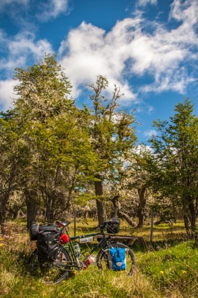 bike-in-the-woods