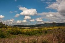 rolling-farmland