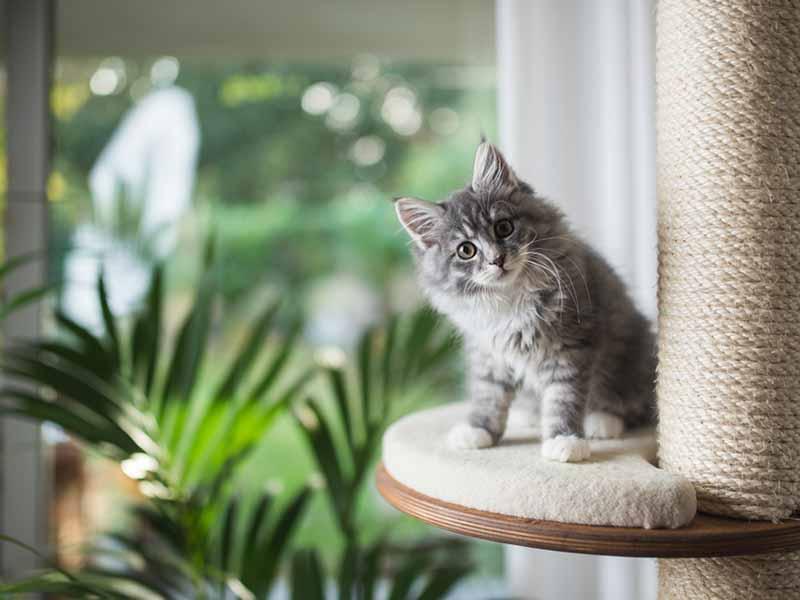 Basic Indoor Plant Care & Selection: Pet-Safe Plants