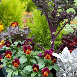 fall winter container plant combination
