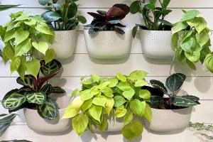 WallyGro Wall Plants
