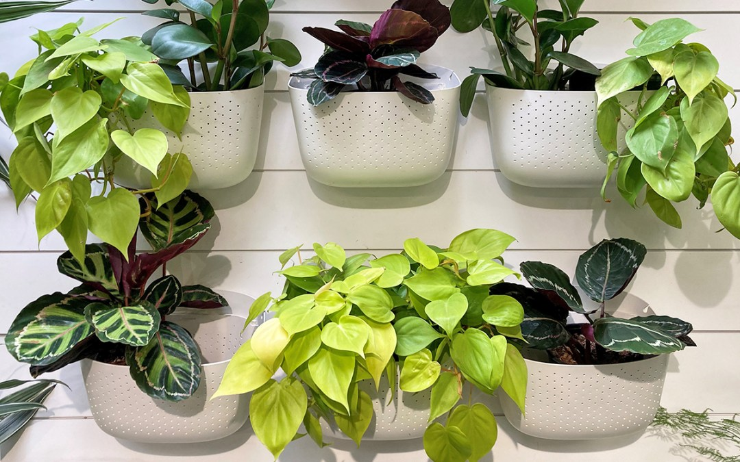 Indoor Vertical Gardening: Hanging with Plants