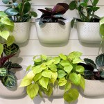 WallyGro Wall Plants