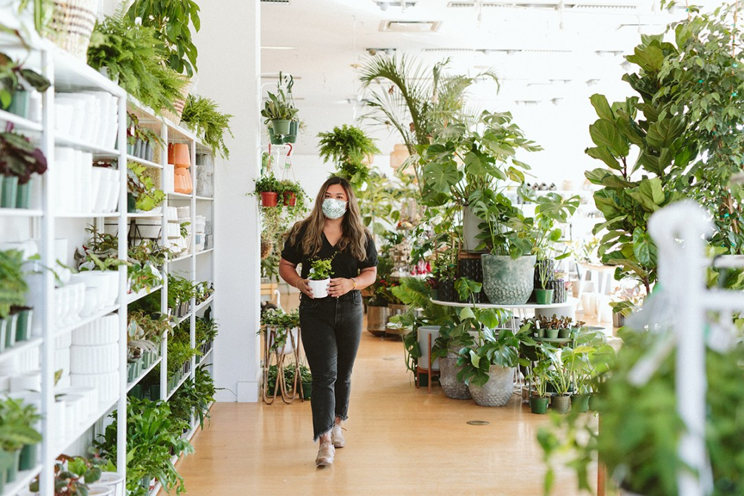 Basic Indoor Plant Selection & Winter Care