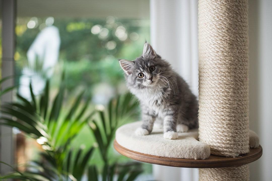 Pet-Safe Indoor Plants