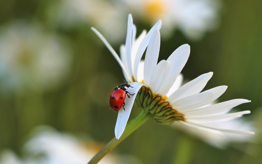 Pollinators & Beneficial Bugs