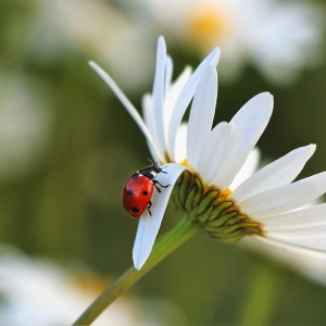 Pollinators & Beneficial Bugs