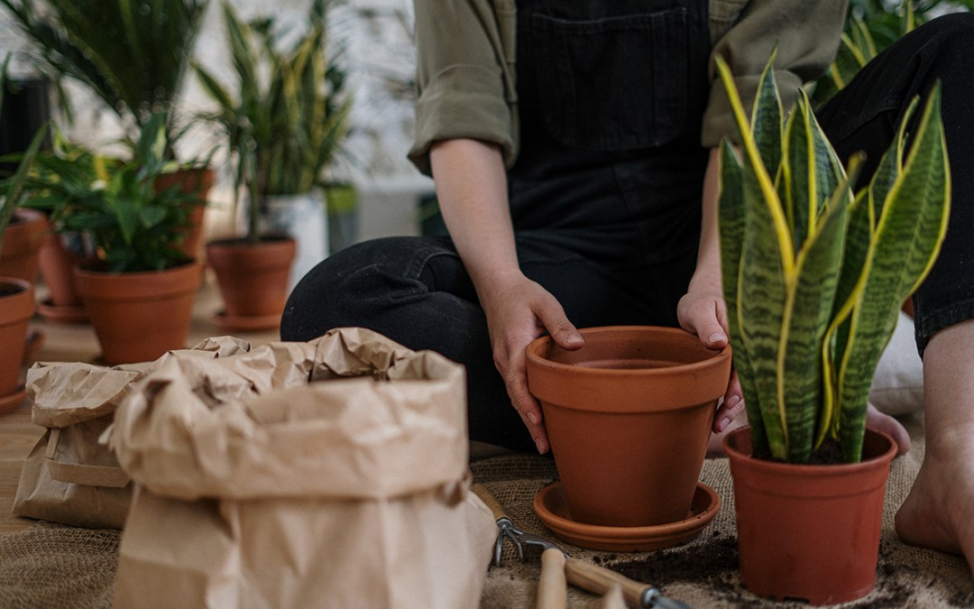 To Pot or Not: Repotting Indoor Plants