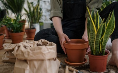 How to Repot Your Indoor Plants