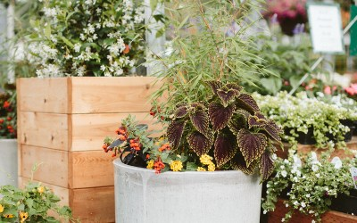 "How to Refresh a ""Tired"" Container Planting"