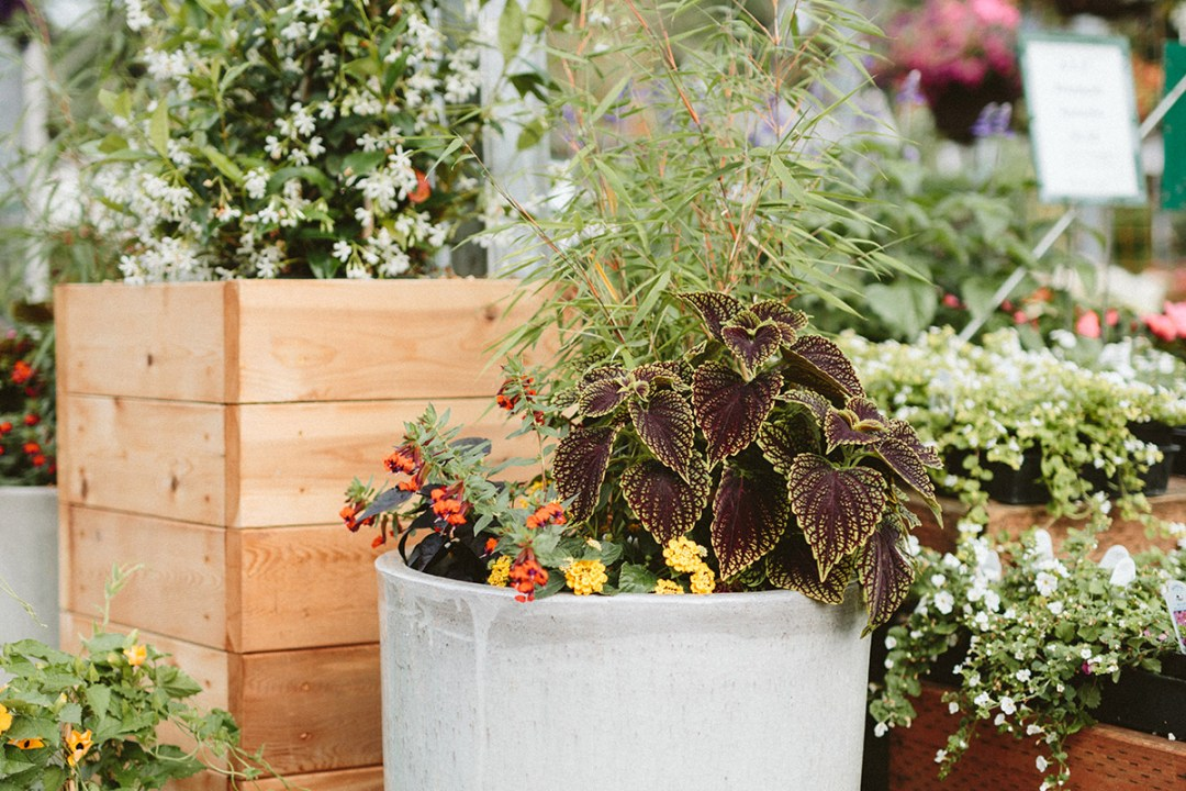 Refreshing Container Plantings