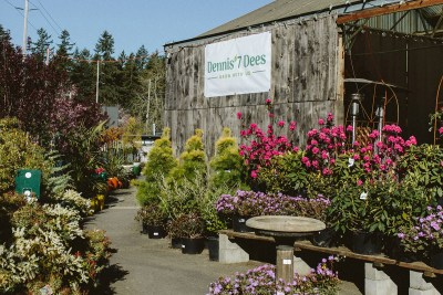 shrubs and trees at the garden center