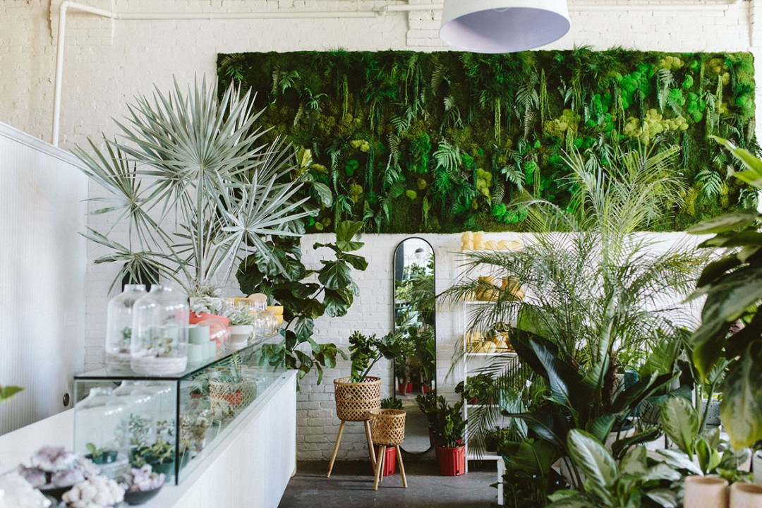 plant shop with moss wall