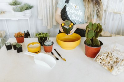 potting cacti and succulents