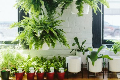 ferns on shelf