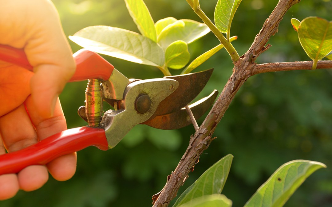 Pruning 101: Tools, Techniques & Timing