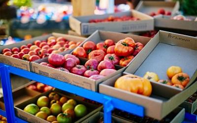 Tomato Variety Showcase