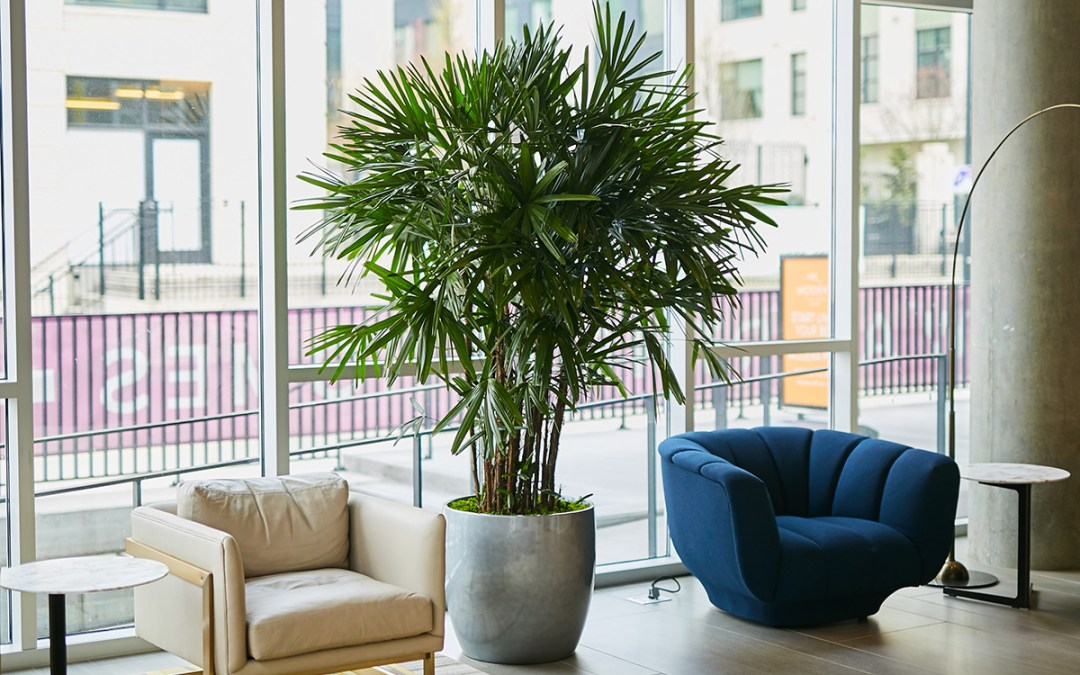 3 Ways to Use Plants for Social Distancing as We Re-enter the Workplace